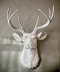 A deer head on a wall at Elizabeth